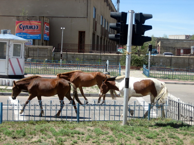 Urban horses near XacBank's branch in Baganuur