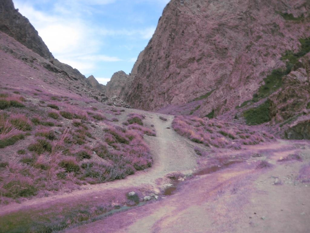 Road in the Gobi