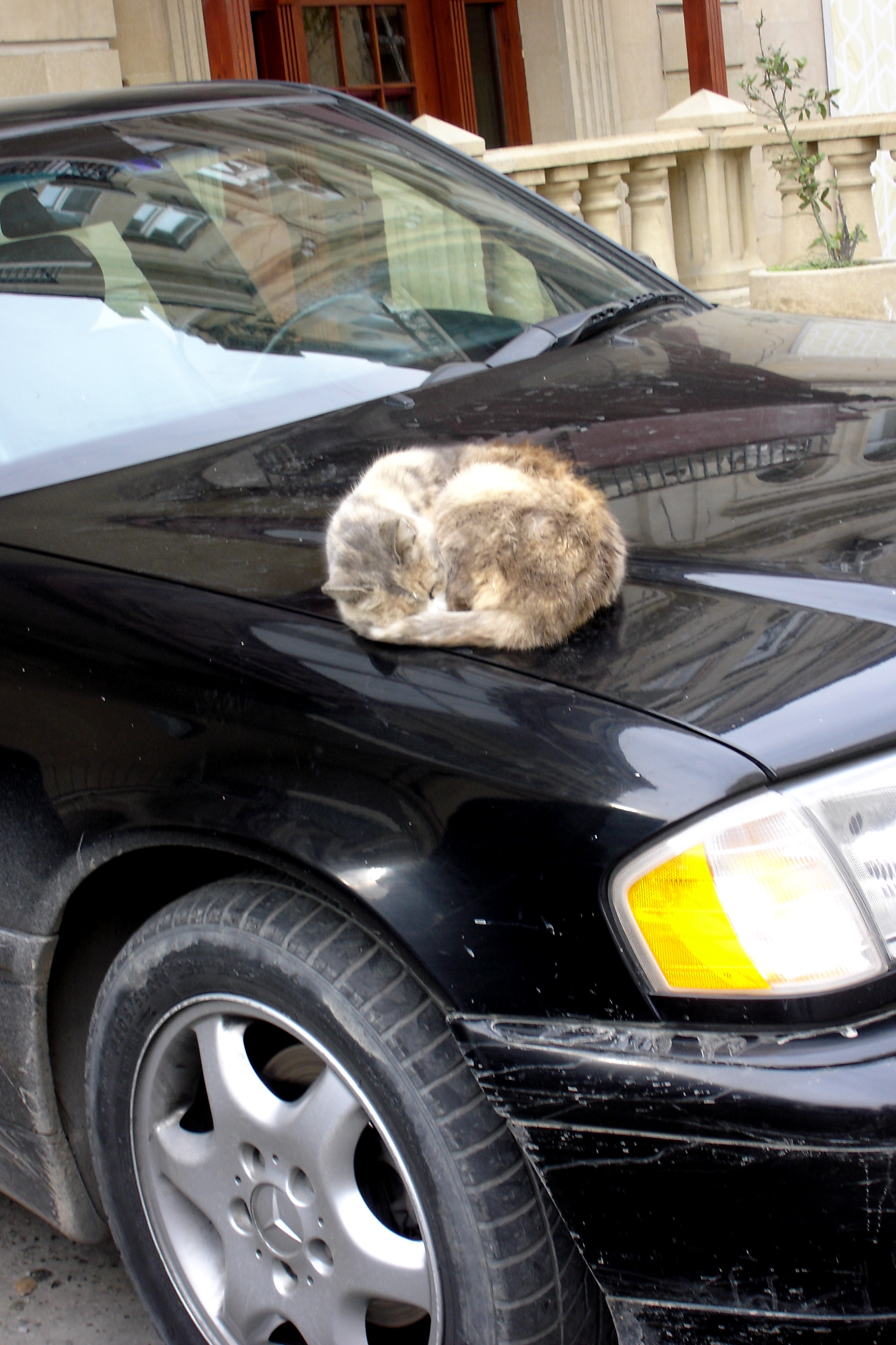 Cat on car.